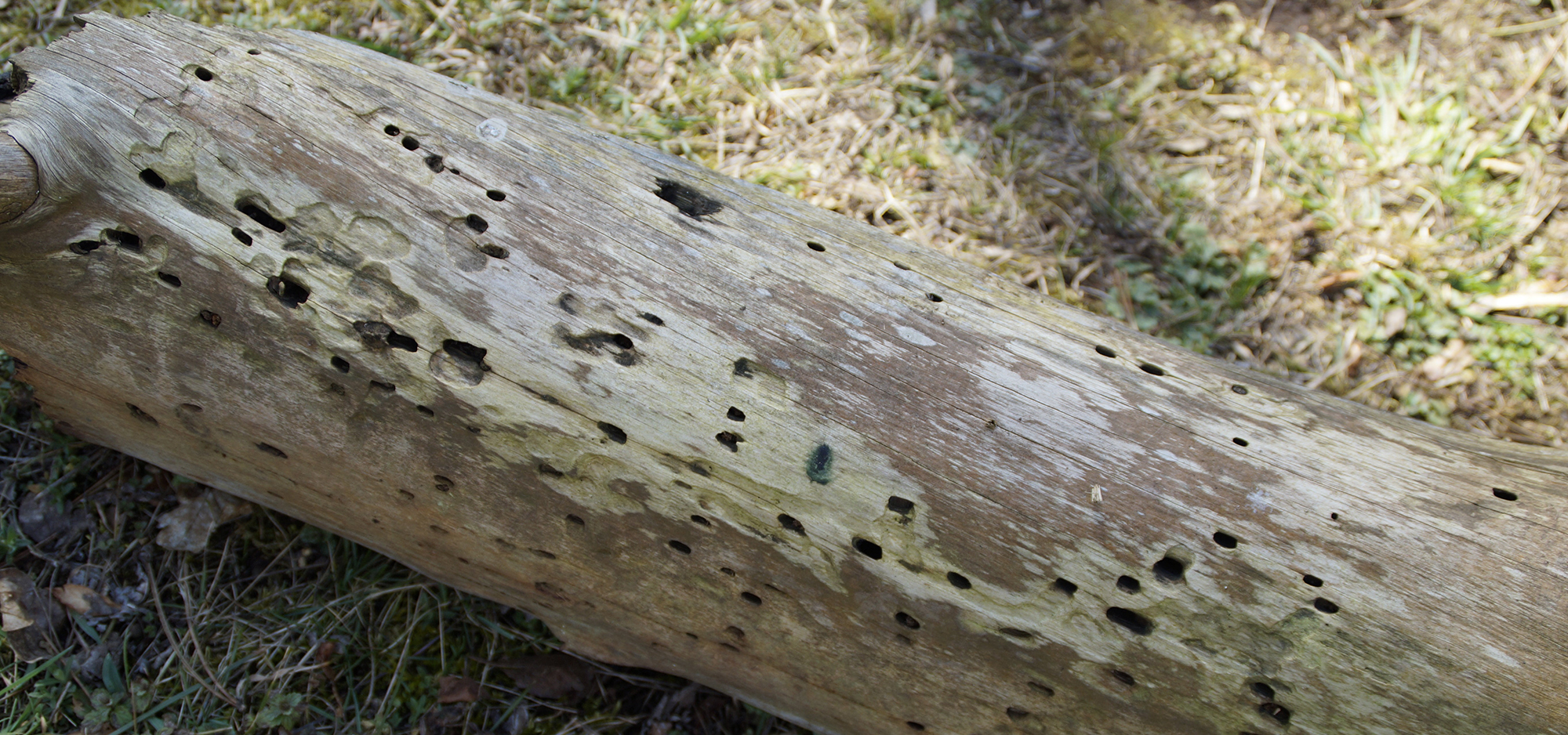 traitement des bois renofors